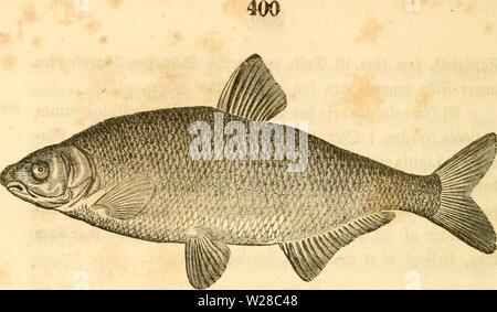 Archive image from page 413 of Danmarks fiske (1838) - Stock Photo