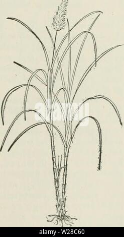 Archive image from page 414 of Cyclopedia of farm crops - Stock Photo