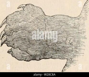 Archive image from page 414 of The cyclopædia of anatomy and - Stock Photo