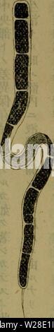 Archive image from page 429 of Dbutsugaku zasshi (1889) - Stock Photo