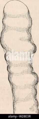 Archive image from page 429 of The cyclopædia of anatomy and - Stock Photo