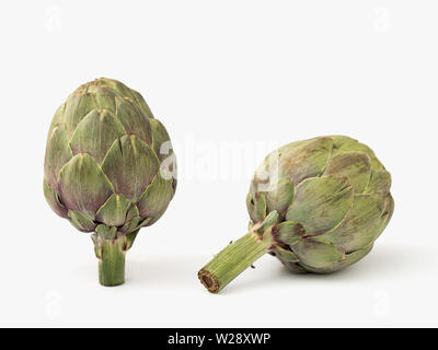two artichokes on white background with natural light - Stock Photo