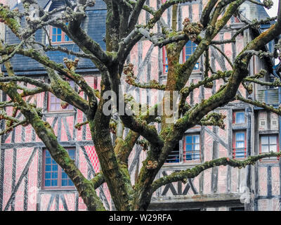 Medieval half-timbered building with old tree covered in green brown moss, Tours Village, France - Stock Photo