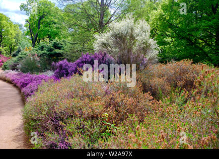 Path lined with trees, & purple, pink & white flowering bushes & shrubs in the Spring at Isabella Plantation, Richmond Park, Southwest London, England - Stock Photo