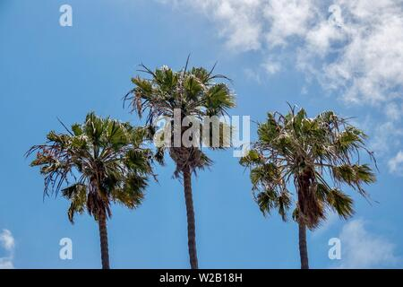 palm trees against blue sky - Stock Photo