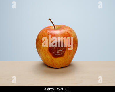 Bruised ripe red apple starting to rot on wood table with blue background. Concept: rotten to the core, one bad apple... - Stock Photo