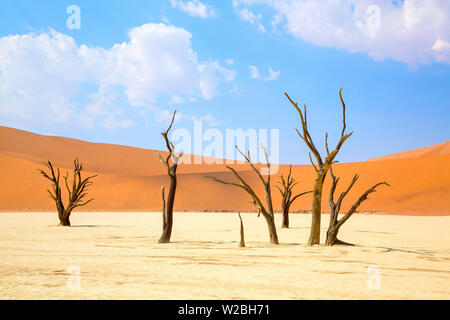 Camel thorn trees in Sossusvlei, Namibia - Stock Photo