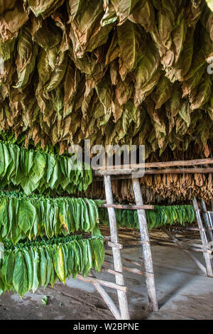 Drying house at the Alejandro Robaina Tobacco Plantation, Pinar del Rio Province, Cuba - Stock Photo