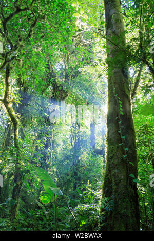 Costa Rica, Monteverde, Monteverde Biological Reserve, Cloudforest - Stock Photo