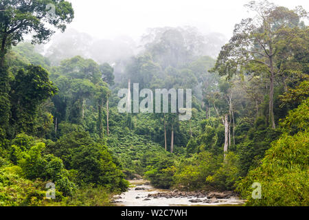 Mist & river through tropical rainforest, Sabah, Borneo, Malaysia - Stock Photo