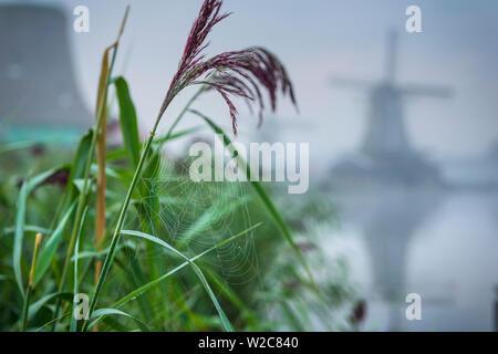 Netherlands, North Holland, Zaandam, Zaanse Schans, Windmills - Stock Photo