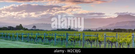Picturesque Vineyard illuminated at sunset, Blenheim, Marlborough, South Island, New Zealand - Stock Photo