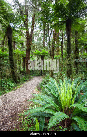 Subtropical Rainforest, Karamea, West Coast, South Island, New Zealand - Stock Photo