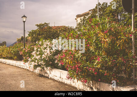 The streets of the Montenegrin city of Kotor. European old city background. - Stock Photo