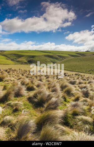 New Zealand, South Island, Southland, The Catlins, Slope Point, Southern-most point of the South Island of NZ, tussock landscape - Stock Photo