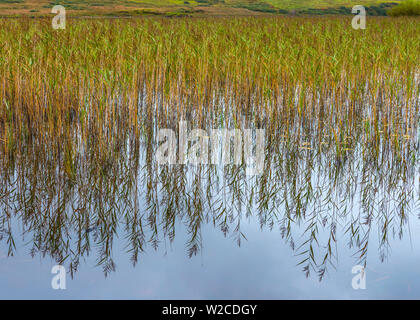 UK, Scotland, Argyll and Bute, Islay,  Loch Finlaggan, centre of the Lordship of the Isles and Clan Macdonald - Stock Photo