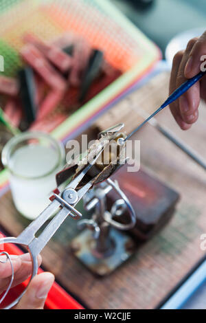 Vietnam, Halong Bay, floating cultured pearl farm, oyster with seed - Stock Photo