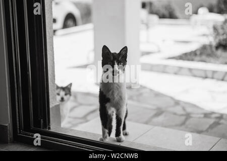 Black and white photo of stray cats. One kitten spies or looks into the house through the window. Homeless cats Stock Photo