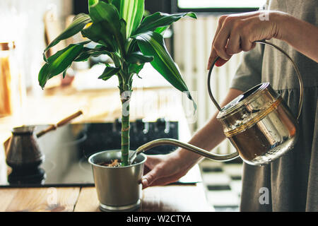 Young woman in grey dress sprays water on houseplant in the kitchen, slow life - Stock Photo