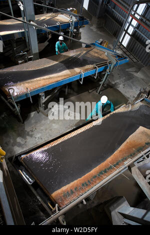 Mining titanium mineral sands. Materials Separation Process Plant. Metallurgical operators working at wet gravity Wilfley vibrating or shaking tables. - Stock Photo