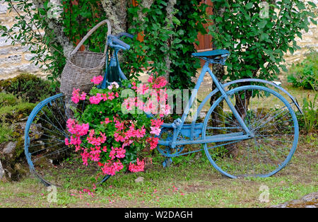 old french bicycle painted blue with hanging pink geranium flowers, lot valley, france - Stock Photo