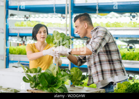 Man and woman feeling busy while planting greens in greenhouse