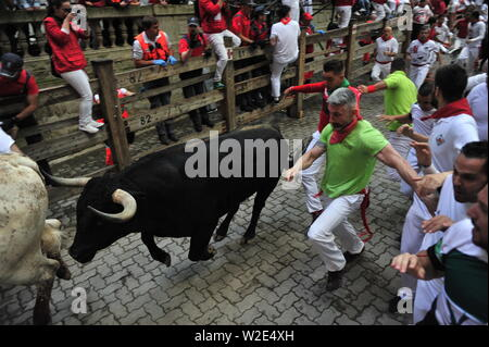 Revellers run with a Cebada Gago ranch fighting bull before entering the bullring during the Festival.San Fermín Festival: The Running of the Bulls, or Encierro, takes place in the morning of the second day of the San Fermín festival. After a long and eventful first day commencing the festival, including the opening ceremonies, the Running of the Bulls comes in a flash. - Stock Photo