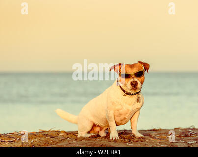 Summer beach vacation concept with dog wearing sunglasses sitting on sand - Stock Photo