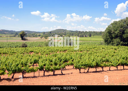 Côtes du Luberon Vineyards or Vineyards in the Calavon Valley Bonnieux Luberon Provence France - Stock Photo