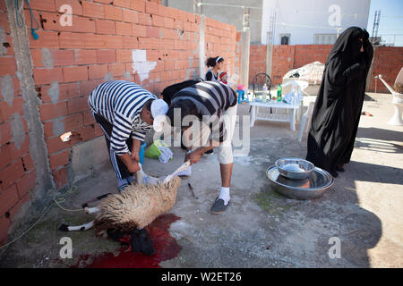 November 6, 2011 – Kairouan, Tunisia - A 27 year old Tunisian Salafist man (C) and his father (L) slaughter a sheep on the first day of the Muslim holiday of Eid al-Adha in their house in Kairouan. Kairouan is considered by many Muslims to be Islam's fourth holiest city. Eid al-Adha, Festival of Sacrifice, is an important religious holiday celebrated by Muslims worldwide to commemorate the willingness of Prophet Ibrahim to sacrifice his son Ishmael as an act of obedience to God. Muslims commemorate this occasion by slaughtering an animal (usually sheep, but sometimes also camels, cows, and goa - Stock Photo
