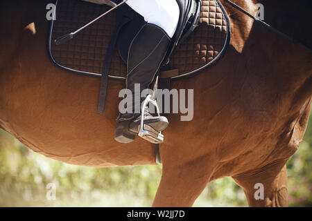 The rider sits astride a brown horse, putting his leg in a black boot in the stirrup and holding a whip in his hand. They are illuminated by the Sunny - Stock Photo