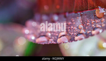 Macro Shot of Water Droplets on a Leaf - Stock Photo