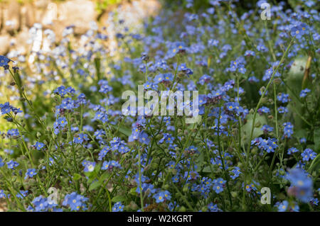 Small light blue flowers on a green background - Stock Photo