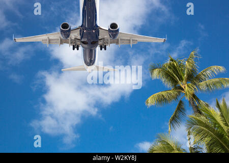 Bottom View of Passenger Airplane Flying Over Tropical Palm Trees. - Stock Photo