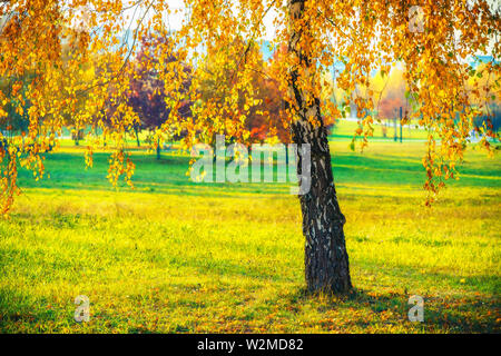 Lonely birch tree in autumn park - Stock Photo