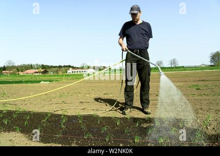 farmer watering young plants with hosepipe nozzle on field, in Bavaria, Germany - Stock Photo