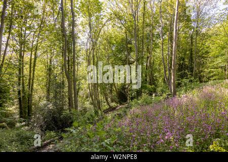 Faversham, Surrey, England, UK, Local Area Photography - Stock Photo