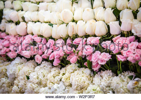 Beautiful white and pink roses pattern. Bunch of roses background. Abundance concept. - Stock Photo