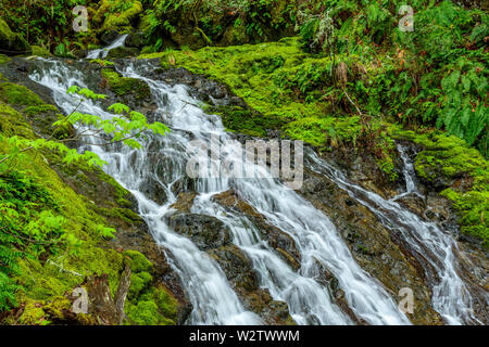 Cataract Falls, Cataract Canyon, Mount Tamalpais, Marin County, California - Stock Photo