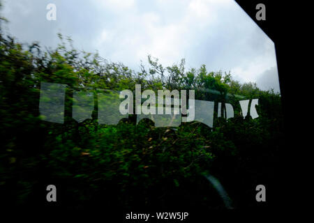 View from a bus seat through the bus window at a reflection of the bus windows and passengers on the bus in the opposite hedgerow - Stock Photo