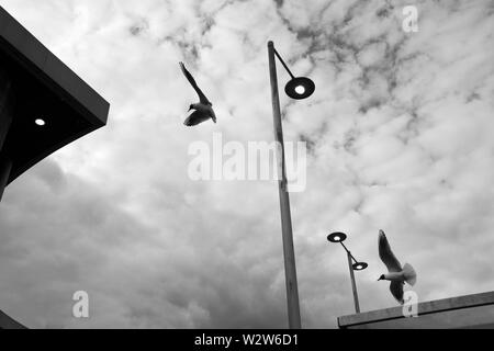 Seagulls in flight against an atmospheric, cloudy, monochrome, black and white sky, amongst street lighting and building tops at Newport Bus Station - Stock Photo