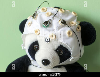 Magdeburg, Germany. 03rd May, 2019. A stuffed animal with a hood and electrodes can be seen in the Leibniz Institute's Laboratory of Neurobiology. Developmental psychologist Wetzel heads the CBBS Neurocognitive Development research group and, together with her team, investigates attention in childhood and in adults as well as the effects of distraction in thought and learning processes. (to dpa story 'Technology and Brain') Credit: Jens Büttner/dpa-Zentralbild/dpa/Alamy Live News - Stock Photo