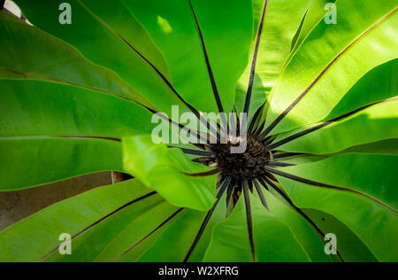 Fern green leaf with sunlight. Nature background. Macro shot of fern leaf texture. Fern leaf in tropical forest. Eco nature concept. Ecology concept. - Stock Photo
