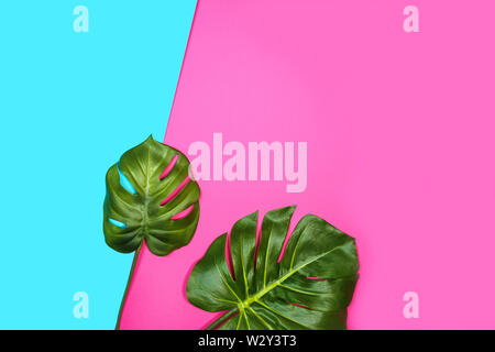 Tropical leaves Monstera, Swiss Cheese Plant, on pink blue background. - Stock Photo