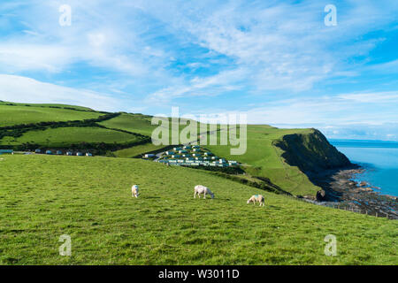 Sheep grazing close to the Pen Y Graig caravan park, on the Ceredigion coast Borth. June 2019 - Stock Photo