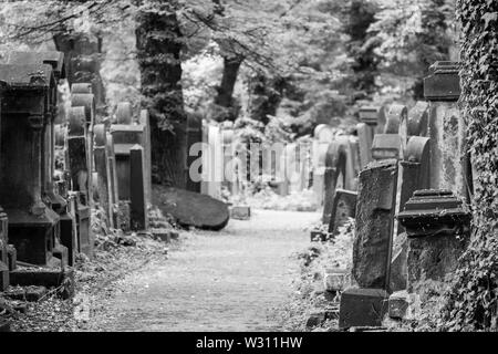 Old gravestones in the New Jewish Cemetery in Miodowa Street. The neglected, overgrown cemetery is in the historic Jewish quarter of Kazimierz.