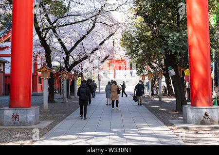 Tokyo, Japan - April 4, 2019: Hanazono Shrine in Shinjuku with inari temple and people walking under red torii gates at cherry blossom flower spring s - Stock Photo