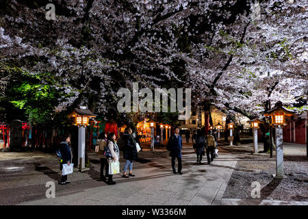 Tokyo, Japan - April 4, 2019: Hanazono Shrine inari temple with people in garden park with cherry blossom flowers on trees in Shinjuku at night - Stock Photo