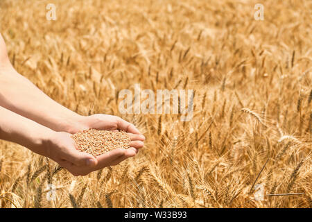 Female farmer with wheat grains in field - Stock Photo