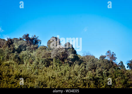 A scenic landscape of Forest himalayan mountain slope in low lying cloud with evergreen conifers tree. Blue sky. Dreamy landscape. Fluffy weather. Wil - Stock Photo